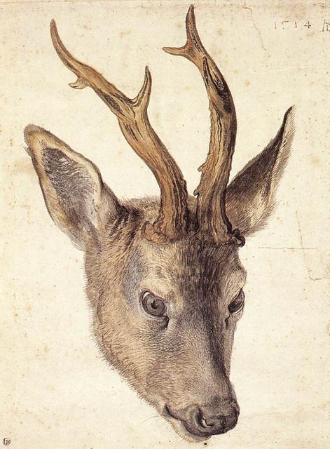 Albrecht-D-rer-head-of-a-roebuck.jpg