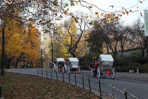 horse drawn carriage tour.jpg