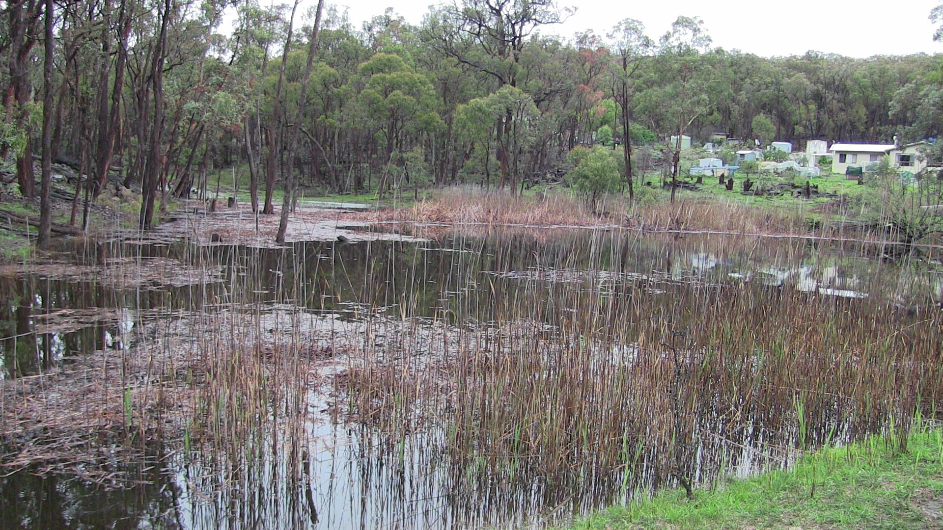 Flood-fox-ducks-dam-From-Drought-to-Flood-032.jpg