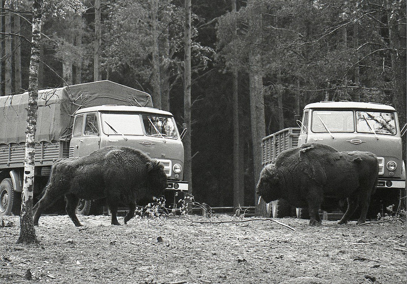 sovetskie poslevoennie fotografi ivanov