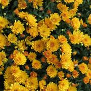 33f919757d0ba416d17fe6cd01304bd4-love-flowers-floral-flowers