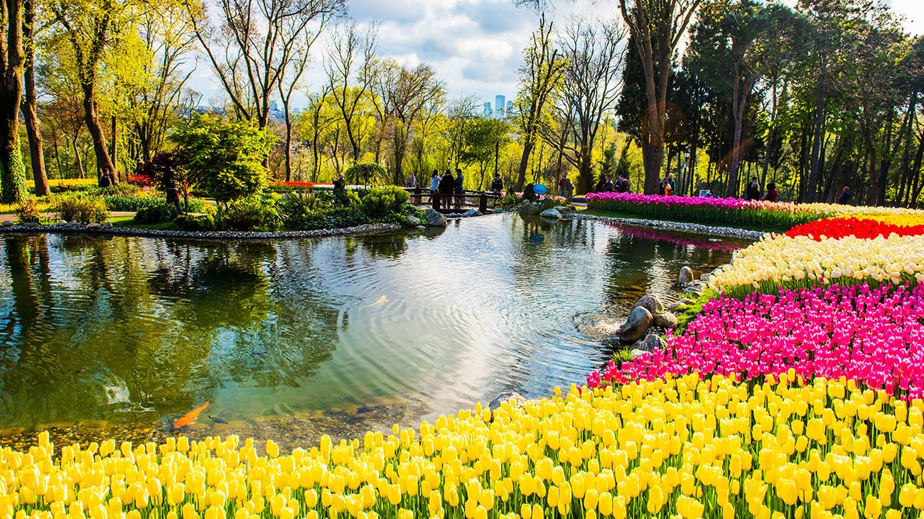 Colorful tulips in the garden. Istanbul, Turkey