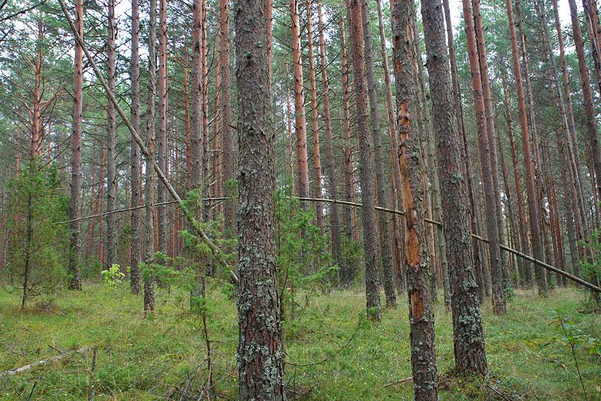 130819-woods-02