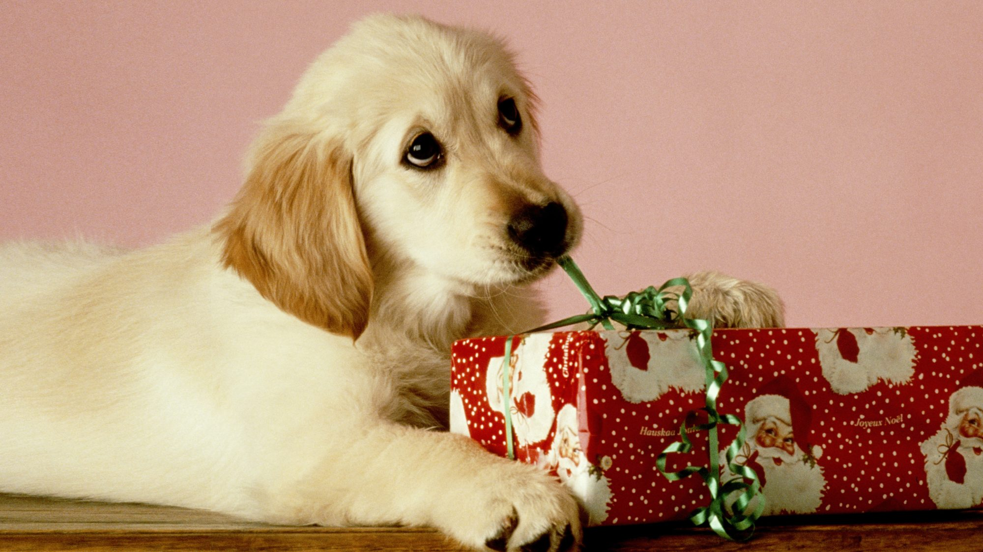 Seven Sentimental Gifts for Dogs