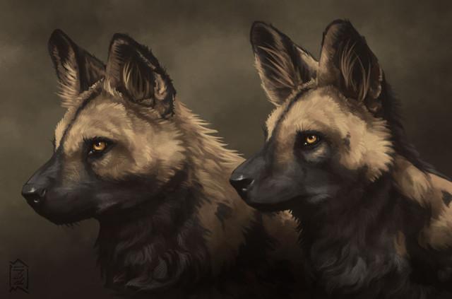African-Wild-Dog-4.jpg