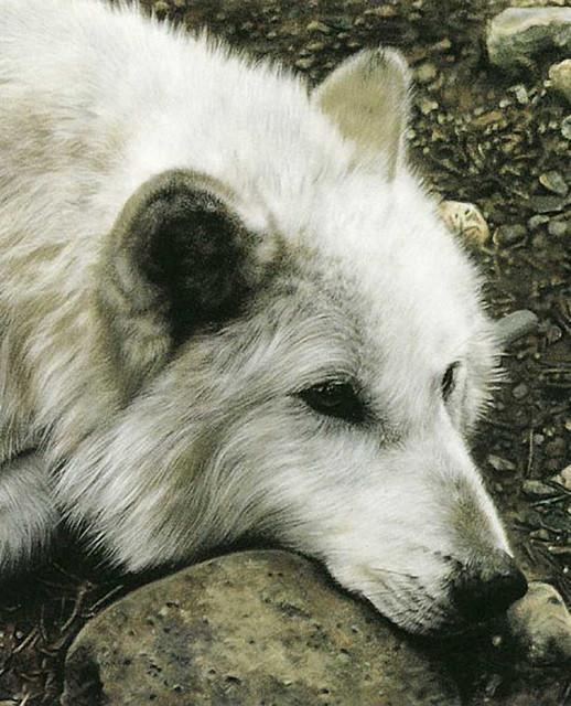 https://i.ibb.co/fnyWs7F/animals-wolves-80024.jpg
