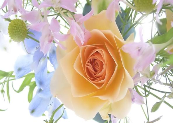 ZV-flower