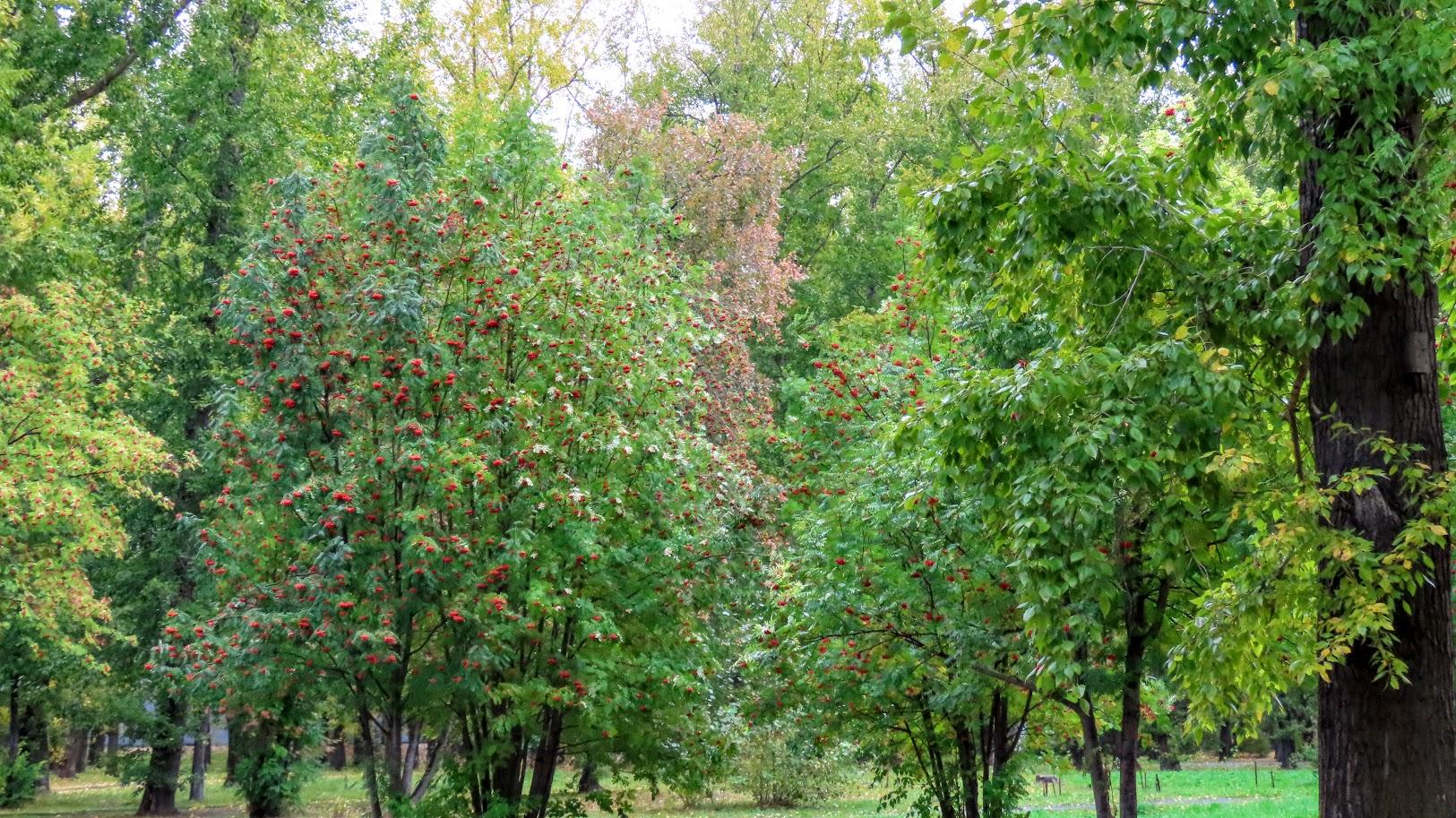 Чайка, шершни и собачки. В Комсомольском парке( 21 фото) 35859587