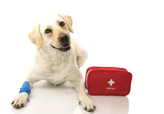 What to Do if Your Dog Gets Hurt on the Trail
