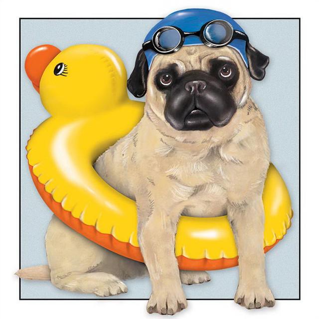 Hond-met-zwemband.jpg