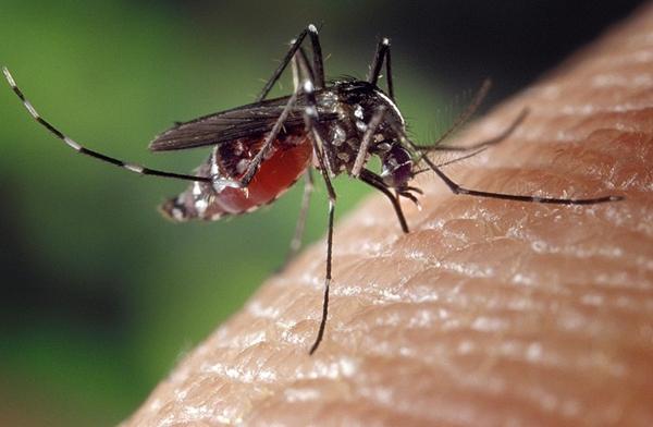 Científicos descubren repelente natural a picadura de mosquitos