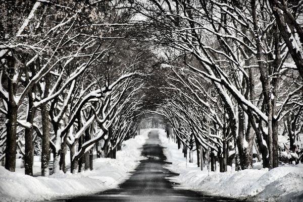 winter photographs 14