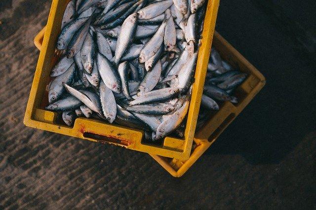 fish-984299-640