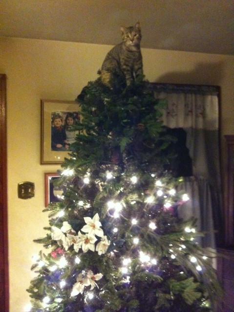 聖誕樹長貓系列,不會長出貓咪的聖誕樹不是一棵好聖誕樹 5