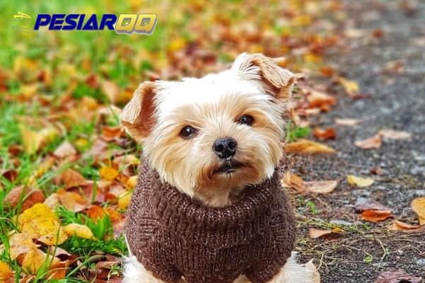 7 Anjing Hasil Kawin Silang yang Bernama Unik, Sudah Pernah Lihat?