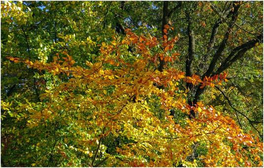 jesen-blog