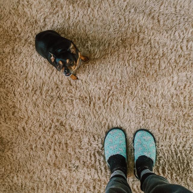 https://i.ibb.co/g7h5Yw4/carpet-cleaning-service.jpg
