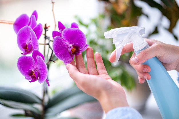 5 Ways to Take Care of Orchid Flowers in Your Home