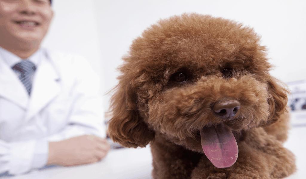 VET Market Best Pet Insurance