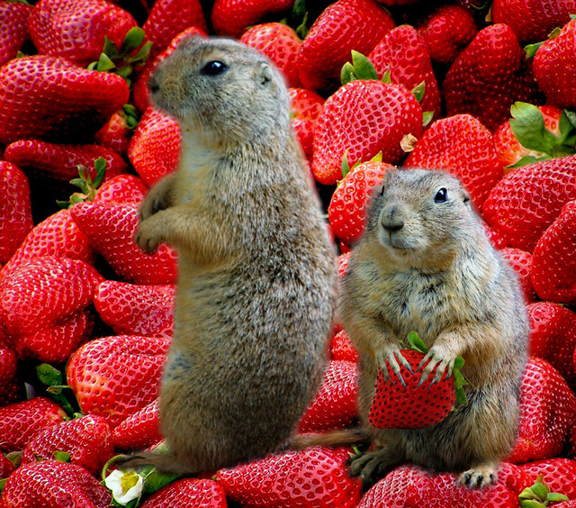 strawberry-edit