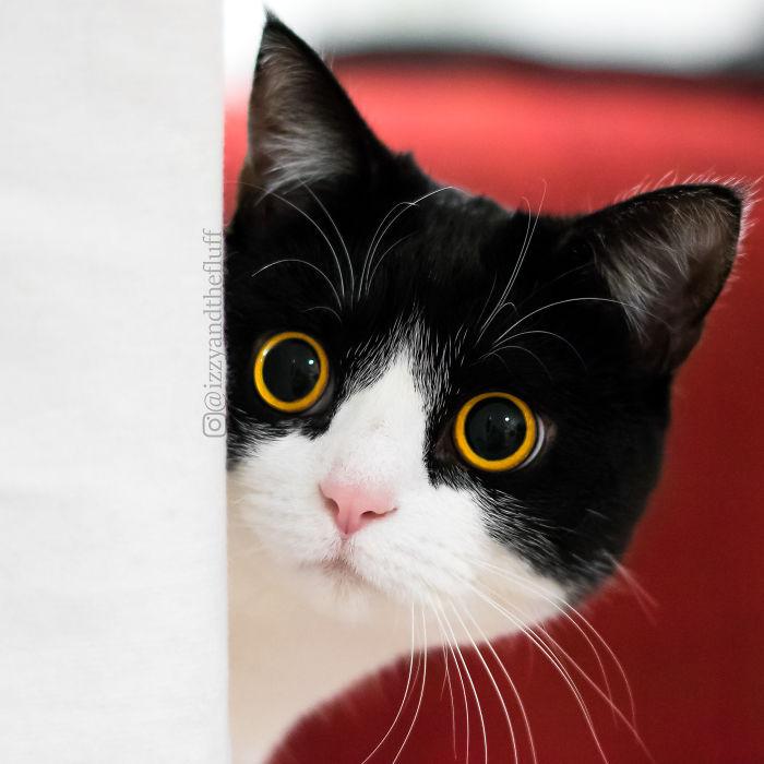 Кот Иззи с невероятными глазами покорил соцсети