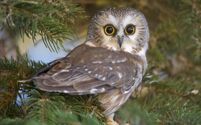 owlbert-einstien