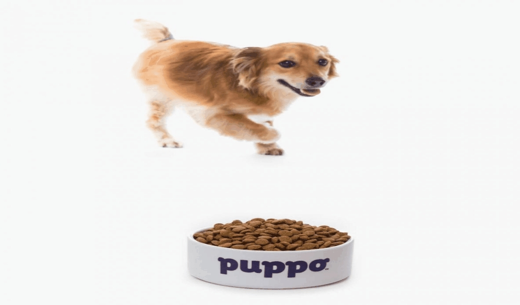 The Odd stuff Pet Food Industry