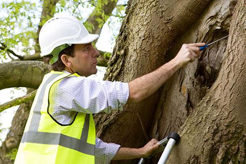 About Tree Surveyor
