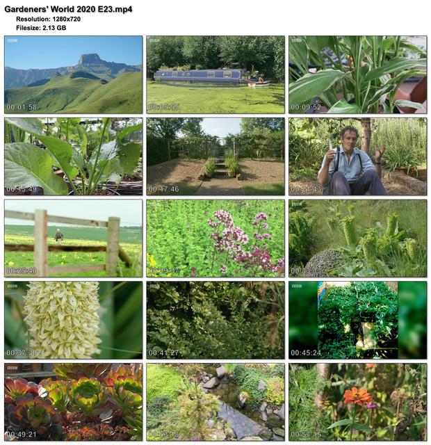 Gardeners-World-2020-E23.jpg