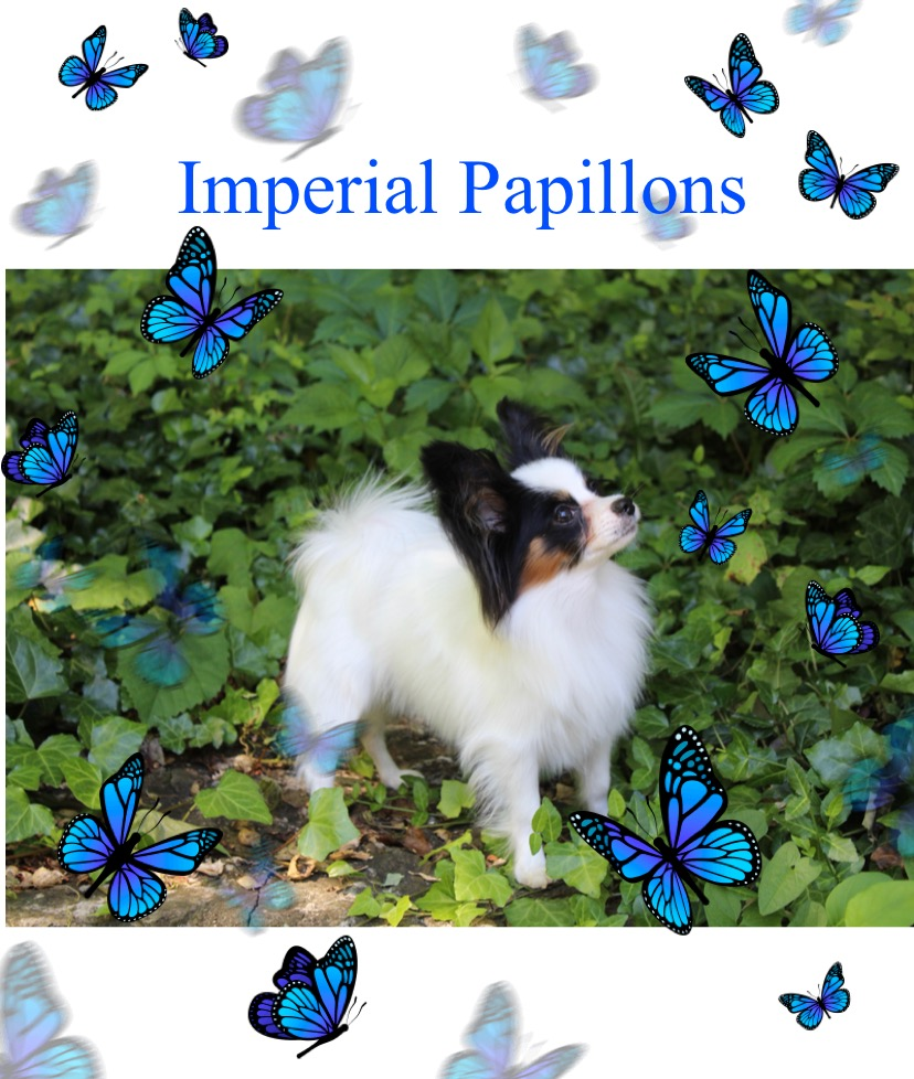 Imperial Envelope Please