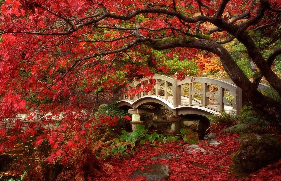 japanese-garden-british-columbia
