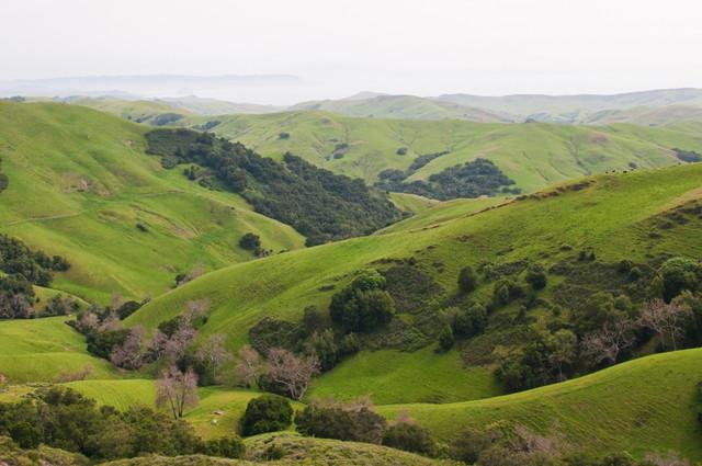 Rollg-Hills