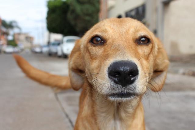 [Imagen: perro-callejero-1.jpg]