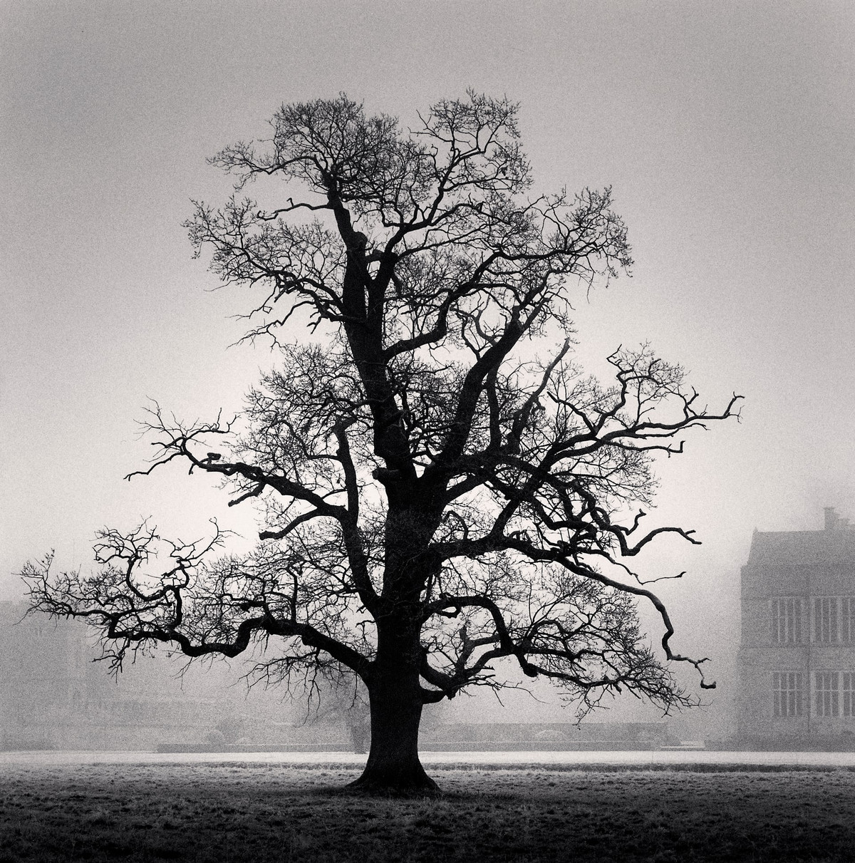 Портреты деревьев Майкла Кенны 10