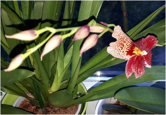 orhideja-na-novo-blog
