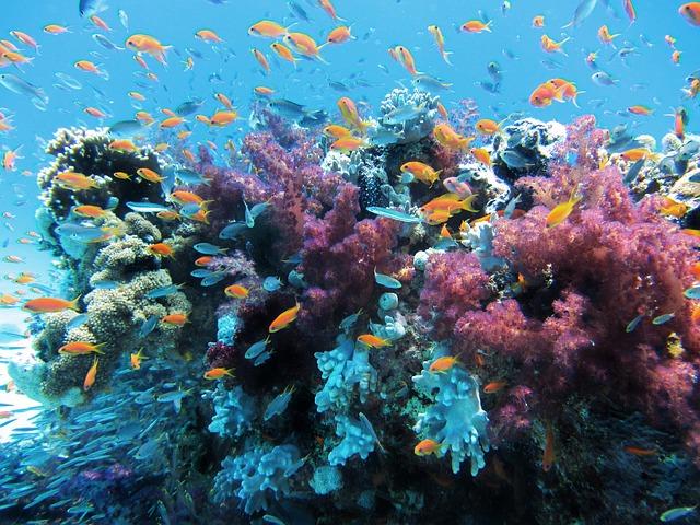 underwater-123282-640