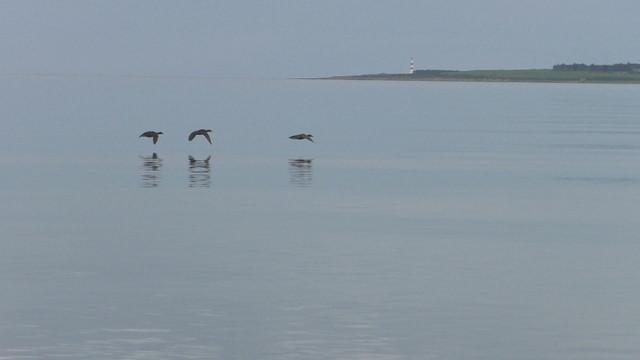 moray-3-dornoch-and-dolphins-Still020