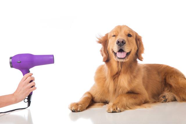 DogGrooming
