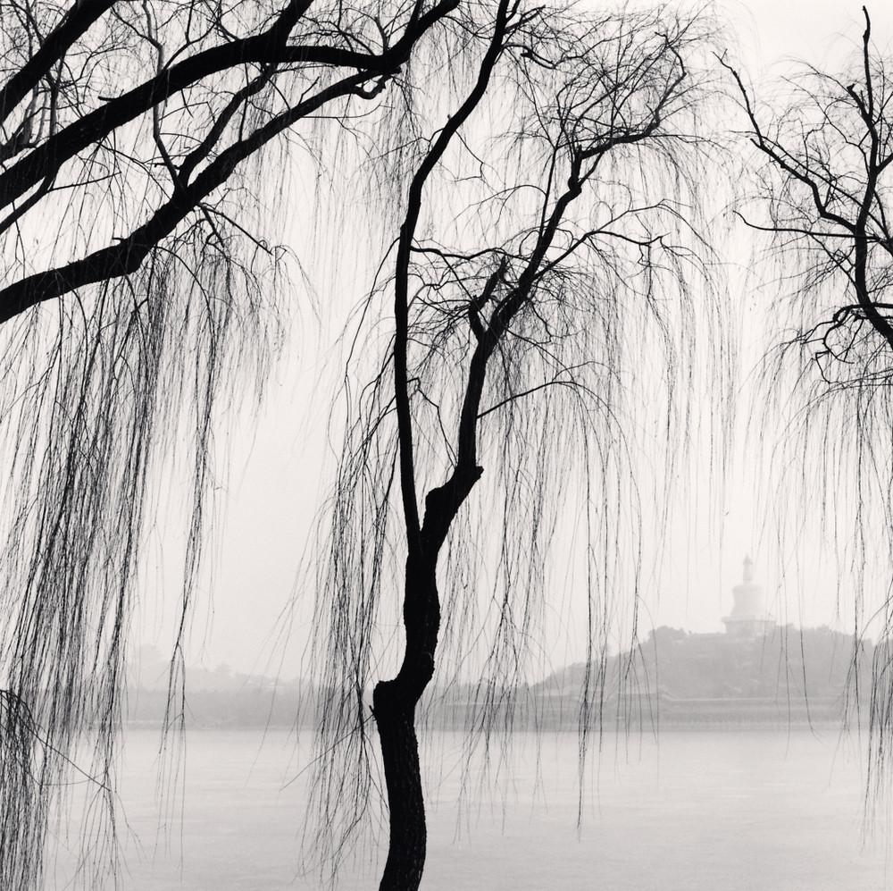 Портреты деревьев Майкла Кенны 27