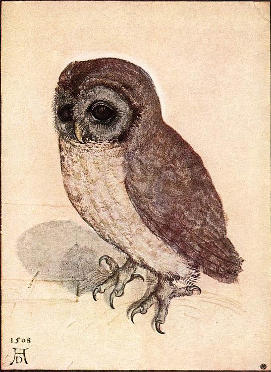 Albrecht-D-rer-little-owl.jpg