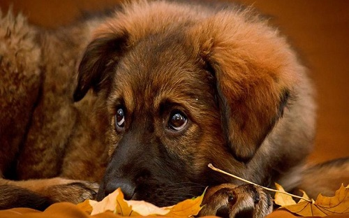 cutie-dogs-fall-leaves-12148-1440x900-880