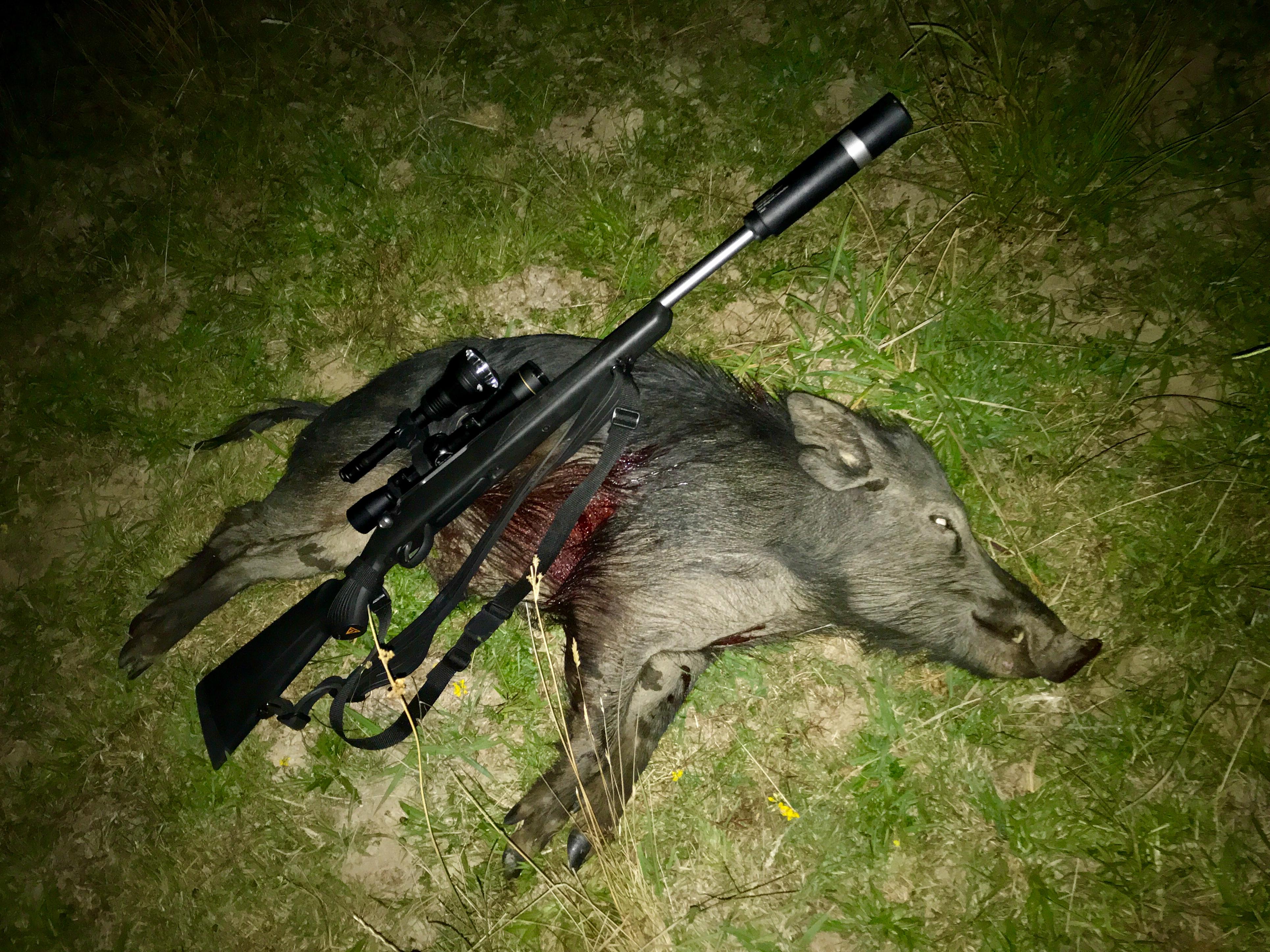 Hunting-Hokianga4.jpg