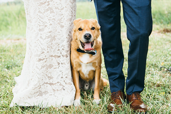 Dog standing in between bride and groom