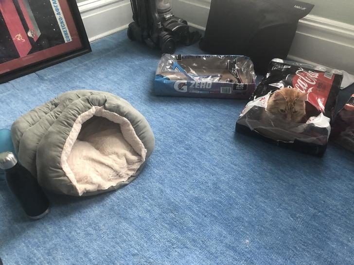 Фотоподборка о том, как тяжело жить с котом под одной крышей