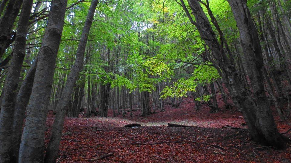 The Woods Bosco