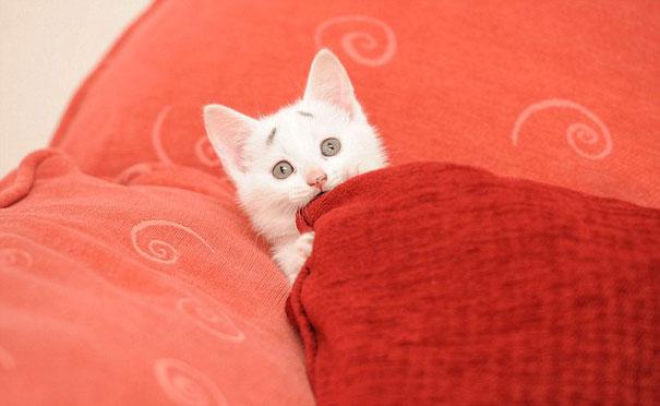 Знакомьтесь - удивлённый котёнок Гэри, который родился с бровями