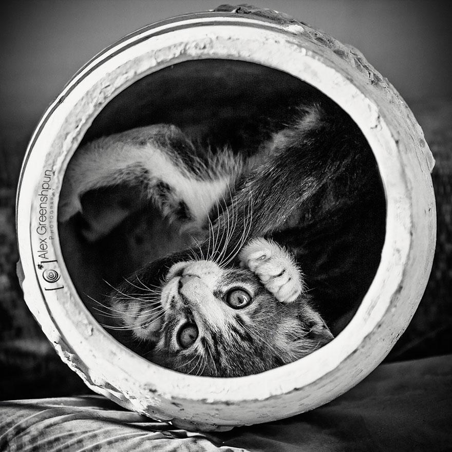 Таинственная кошачья жизнь в чёрно-белых фотографиях-6