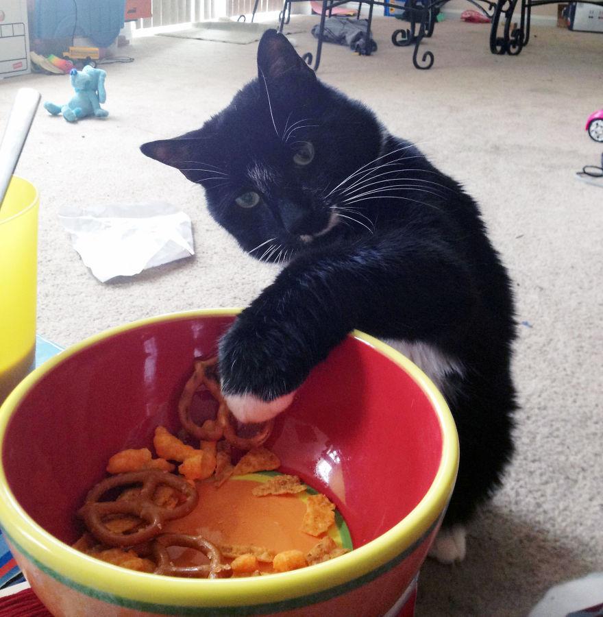 Коты, которых поймали на горячем - 45 отчаянных фотографий - 40