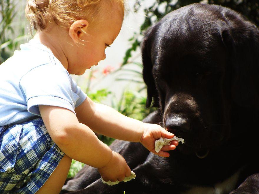 Когда собаки большие, а дети маленькие - 44 потрясающие фотографии - 42