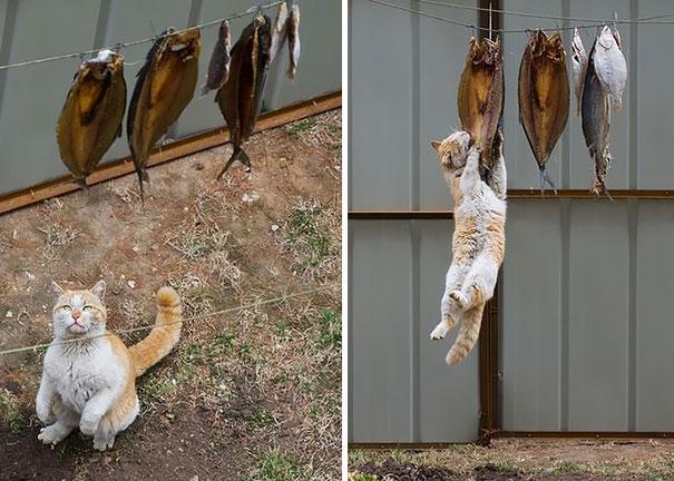 Коты, которых поймали на горячем - 45 отчаянных фотографий - 3